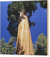 Giant Sequoia Wood Print