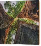 Giant Sequoia Sunset Wood Print