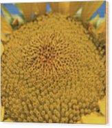 Giant Sunflower Wood Print