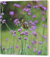 Giant Swallowtail Butterfly In Purple Field Wood Print