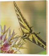 Giant Swallowtail With Yosemite Showy Milkweed Wood Print