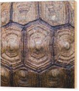 Giant Tortoise Carapace Wood Print