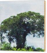 Giant Tree In Amazon Skyline Wood Print