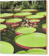 Giant Water Lily Platters Wood Print