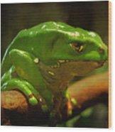 Giant Waxy Monkey Tree Frog Wood Print