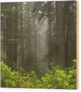 Giants In The Mist Wood Print