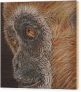 Gibbon Wood Print by Karen Ilari