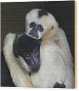 Gibbon Togetherness Wood Print