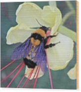 Gila Bumblebee Love Wood Print