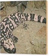 Gila Monster Wood Print
