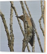 Gila Woodpecker Wood Print