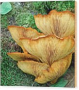 Gilled Fungus Wood Print
