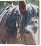 Gilligan The Horse Glacier National Park Wood Print