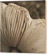 Gills Wood Print