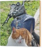 Ginger And White Tabby Cat Sunbathing On A Motorcycle Wood Print