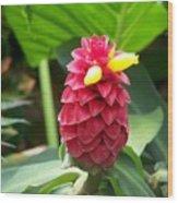 Ginger Blossom Wood Print