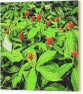 Ginger Flowers Wood Print