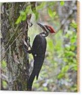Ginger In The Bayou Wood Print