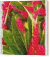 Ginger Plants On Kauai Wood Print