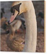 Ginger Swan Wood Print