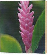 Ginger Wood Print