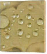 Ginkgo Balls Wood Print