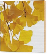 Ginkgo Ginkgo Biloba Leaves In Autumn Wood Print