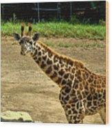 Giraffe 1 Wood Print