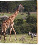 Giraffe And Zebras Wood Print
