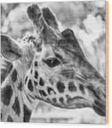 Giraffe Bw Wood Print