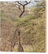 Giraffe Camouflage Wood Print