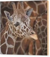 Giraffe - Camouflage Wood Print