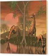 Giraffe Family By John Junek Wood Print