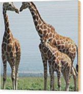 Giraffe Family Wood Print by Sallyrango