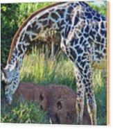Giraffe Feasting Wood Print