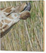 Giraffe Feeding 2 Wood Print