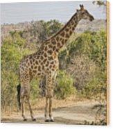 Giraffe Grazing Wood Print