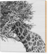 Giraffe Hide And Seek Wood Print