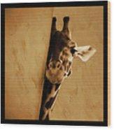 Giraffe Hiding  Wood Print