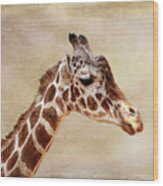 Giraffe Portrait With Texture Wood Print