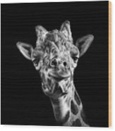 Giraffe In Black And White Wood Print by Malcolm MacGregor