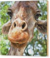 Giraffe Interest Wood Print