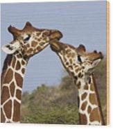 Giraffe Kisses Wood Print