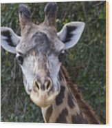 Giraffe Looking At You Wood Print