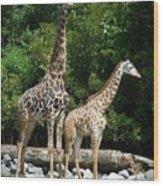 Giraffe, Male And Female Wood Print