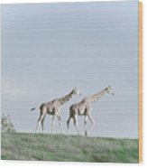 Giraffe Pair On Hill Wood Print