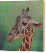 Giraffe Square Painted Wood Print