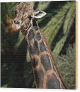 Giraffe Study 2 Wood Print