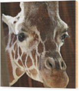 Giraffe Taking A Peek Wood Print
