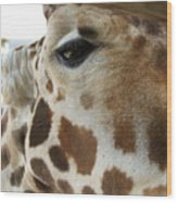 Giraffe Up Close Wood Print